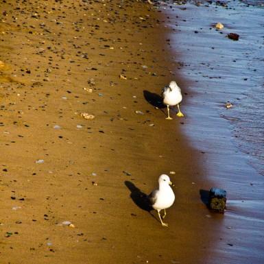 Brooklyn Seagulls - LacossDesigns.com