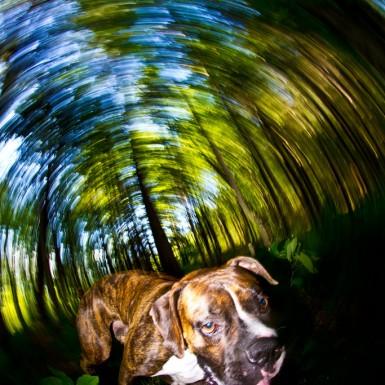Dizzy Boxer - LacossDesigns.com