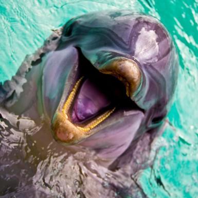 Dolphin Smile - LacossDesigns.com