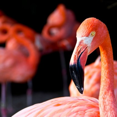 Flamingos At Sea World - LacossDesigns.com