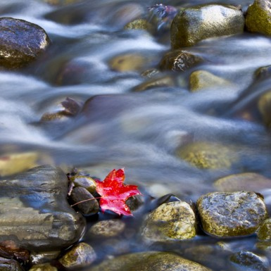 Red Leaf In The Rapids - LacossDesigns.com