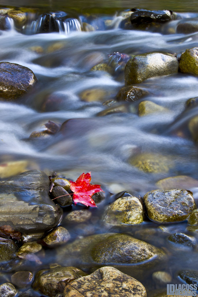 Red Leaf In The Rapids – LacossDesigns.com