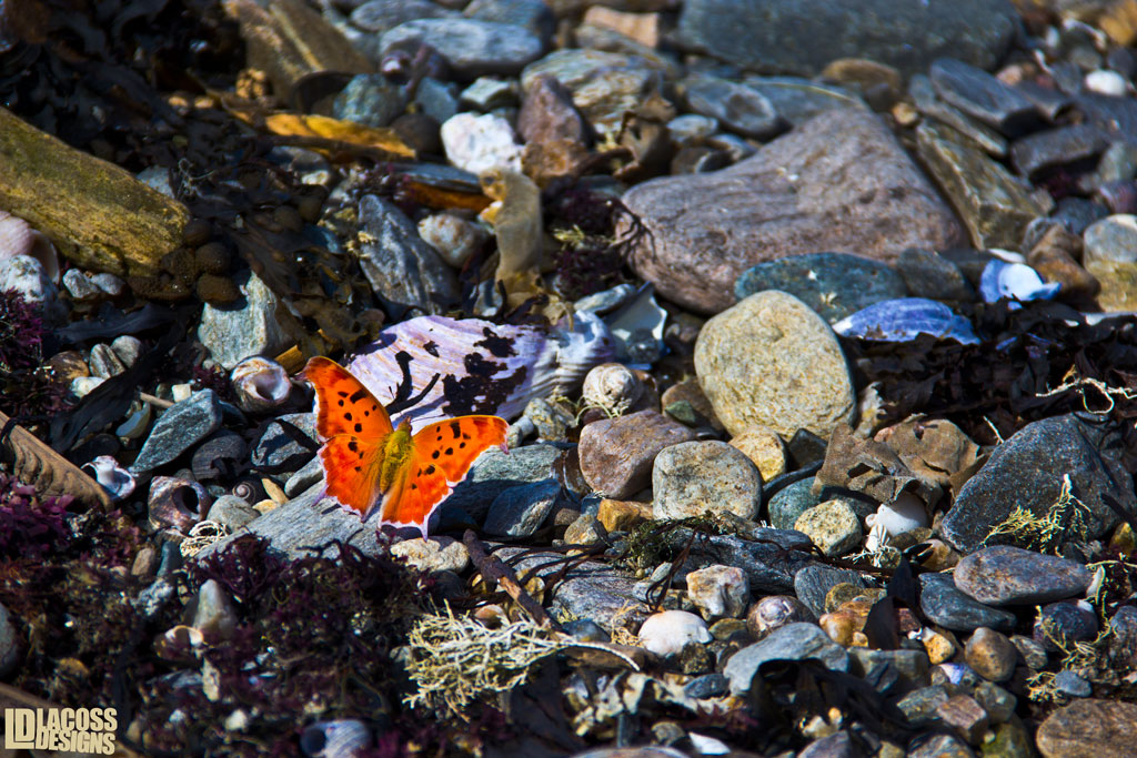 Not So Camo – LacossDesigns.com