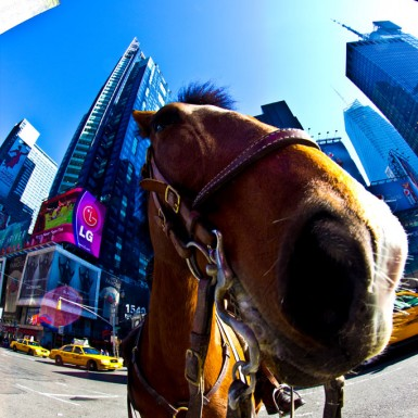 NYPD Horse At Times Square - LacossDesigns.com