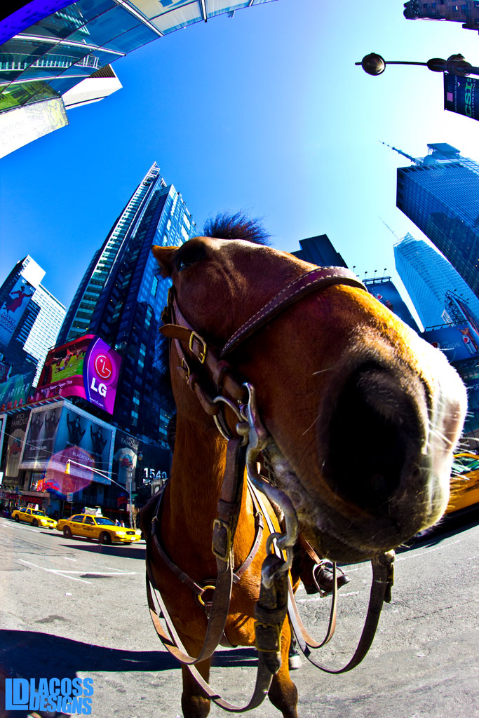 NYPD Horse At Times Square – LacossDesigns.com