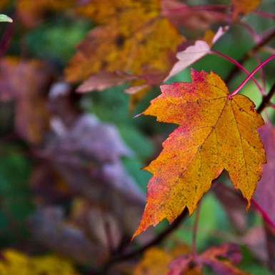 Autumn Vibrancy – LacossDesigns.com