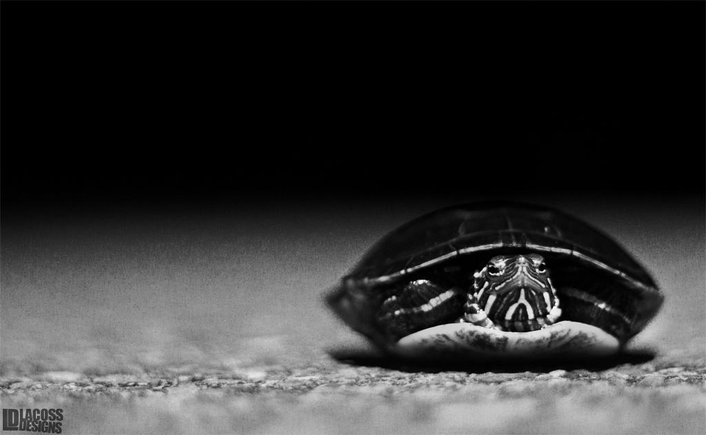 Turtle Crossing – LacossDesigns.com